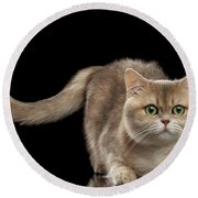 Brittish Cat With Curve Tail On Black Round Beach Towel