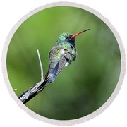Broad-billed Hummingbird Round Beach Towel