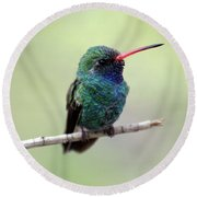 Broad-billed Hummingbird Portrait Round Beach Towel