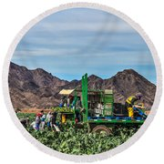 Broccoli Harvest Round Beach Towel by Robert Bales