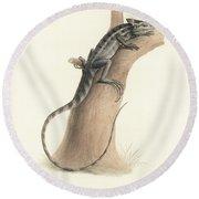Round Beach Towel featuring the drawing Brown Basilisk, Basiliscus Vittatus by Friedrich August Schmidt