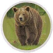Brown Bear 1 Round Beach Towel