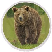 Brown Bear 1 Round Beach Towel