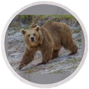 Brown Bear 3 Round Beach Towel