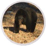 Black Bear Black Bear What Do You See Round Beach Towel