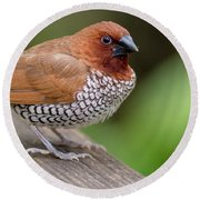 Round Beach Towel featuring the photograph Brown Bird by Raphael Lopez