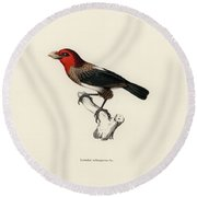 Round Beach Towel featuring the drawing Brown-breasted Barbet, Pogonornis Melanopterus by Breck Bartholomew