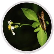 Brown Butterfly On Leaves Round Beach Towel