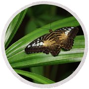 Brown Clipper Butterfly -parthenos Sylvia- On Frond Round Beach Towel