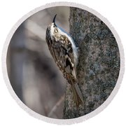 Brown Creeper  Round Beach Towel