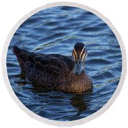 Brown Duck 2 Round Beach Towel