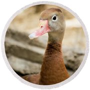 Brown Duck Portrait Round Beach Towel