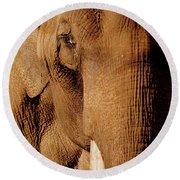 Brown Elephant Round Beach Towel