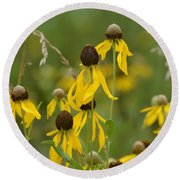 Round Beach Towel featuring the photograph Brown-eyed Susan by Maria Urso