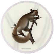 Brown Greater Galago Or Thick-tailed Bushbaby Round Beach Towel