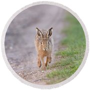 Brown Hare Approaching Down Track Round Beach Towel