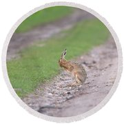 Brown Hare Cleaning Round Beach Towel
