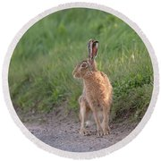 Brown Hare Listening Round Beach Towel