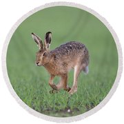 Brown Hare Running Round Beach Towel