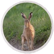 Brown Hare Sat On Track At Dawn Round Beach Towel