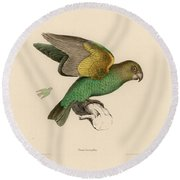 Brown-headed Parrot, Piocephalus Cryptoxanthus Round Beach Towel