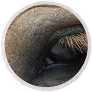 Brown Horse Eye Round Beach Towel