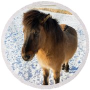 Round Beach Towel featuring the photograph Brown Icelandic Horse In Winter In Iceland by Matthias Hauser