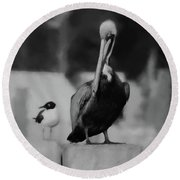 Brown Pelican And Laughing Gull Round Beach Towel
