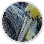 Round Beach Towel featuring the photograph Brown Pelican by Bill Gallagher
