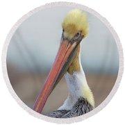 Brown Pelican Preening Round Beach Towel