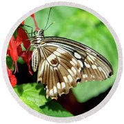 Brown Swallowtail Butterfly Round Beach Towel