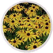Browneyed Susans Round Beach Towel