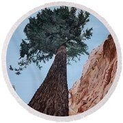 Round Beach Towel featuring the painting Bryce Pine by Kevin Daly