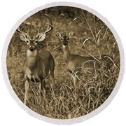 Buck And Doe In Sepia Round Beach Towel