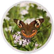 Buckeye Butterfly Posing Round Beach Towel