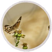 Buckeye Butterfly Round Beach Towel by Steven Parker