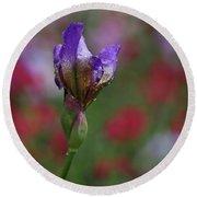 Budding Purple Iris Round Beach Towel