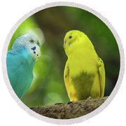 Budgie Buddies Round Beach Towel