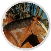 Round Beach Towel featuring the photograph Budweiser Clydesdales  by Bill Gallagher