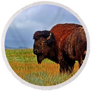 Round Beach Towel featuring the photograph Buffalo 006 by George Bostian