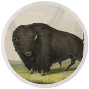 Buffalo Bull Grazing 1845 Round Beach Towel