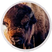 Buffalo Face Round Beach Towel