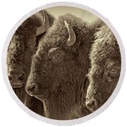 Round Beach Towel featuring the photograph Trio American Bison Sepia Brown by Jennie Marie Schell
