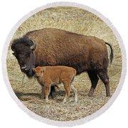 Buffalo With Newborn Calf Round Beach Towel