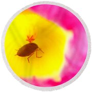 Round Beach Towel featuring the photograph Bug In Pink And Yellow Flower  by Ben and Raisa Gertsberg