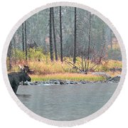Bull And Cow Moose In East Rosebud Lake Montana Round Beach Towel
