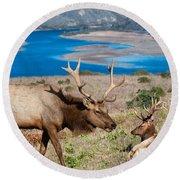 Bull Elk Above Tomales Bay Round Beach Towel