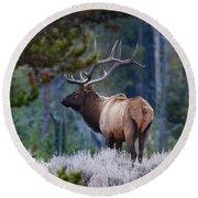 Bull Elk In Forest Round Beach Towel