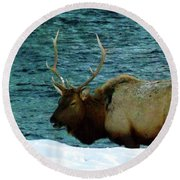 Bull Elk In Winter Round Beach Towel