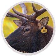 Bull Elk Number 10 Round Beach Towel